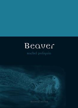 Download Beaver (Animal)