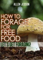 How To Forage For Free Food – Let's Get Foraging