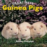 Guinea Pigs (Great Pets)
