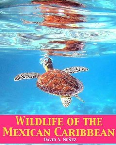 Download ebook Wildlife of the Mexican Caribbean