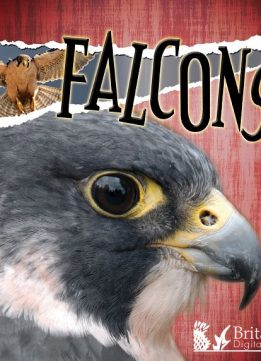 Download ebook Falcons (Raptors (Discovery))