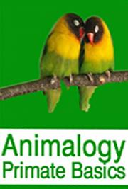 Animalogy: Primate Basics